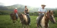 honduras video horses